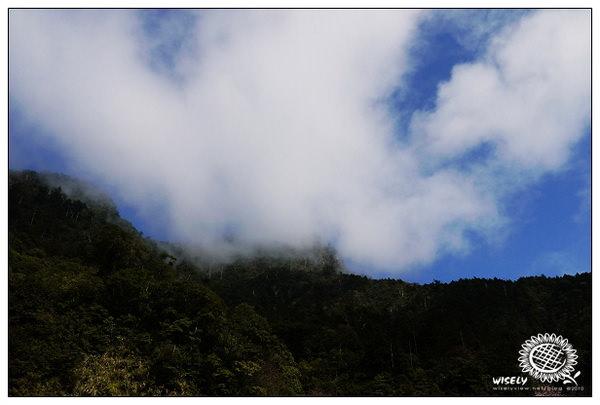 【旅遊】宜蘭.三星銀柳、明池神木隨手拍