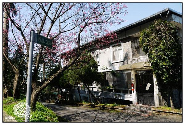 【遊記】新店花園新城賞櫻及街貓隨拍 2010