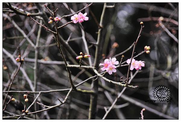 【隨拍】Nikon D90:桃園.忠烈祠/桃園神社 (圖多)