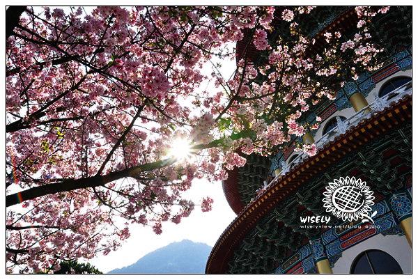 【隨拍】Nikon D90:台北淡水.無極天元宮吉野櫻櫻花 2010
