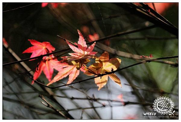 【隨拍】Canon 550D:台北陽明山.台北奧萬大 2010