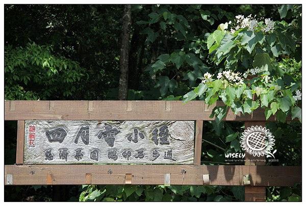 【遊記】苗栗三義.油桐花:四月雪小徑、勝興車站、龍騰斷橋、意蘭樁客家餐館 (AWB聚會)