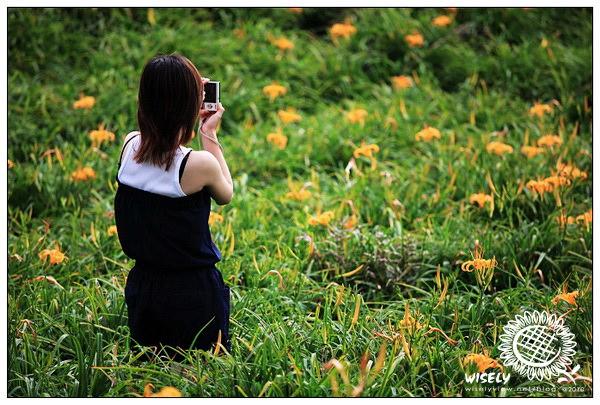 【留影】2010花東遊:花蓮.六十石山金針花隨拍 -05