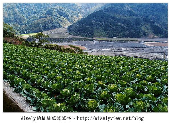 【遊記】台中.和平鄉:武陵農場除夕訪櫻行/含交通資訊 (XZ1隨手拍)