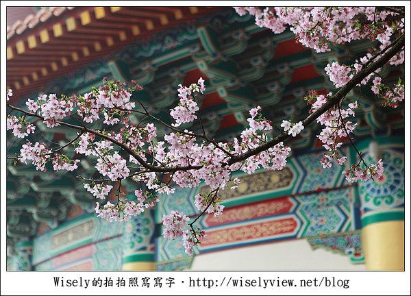 【隨拍】2011淡水無極天元宮.緋霧櫻 (Canon EOS 5D2)