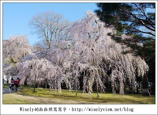 【隨拍】2011關西(京阪神)-04:櫻花七成開的京都醍醐寺 (Fujifilm X100)