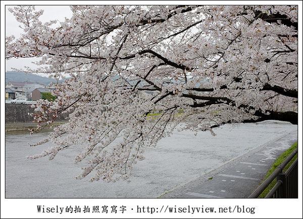 【隨拍】2011關西(京阪神)-09:京都盬小路橋旁的靜默雨櫻 (Fujifilm X100)