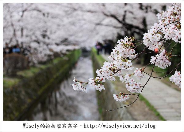 【隨拍】2011關西(京阪神)-13:京都哲學之道裡滿開櫻花美景 (Canon EOS 5D2)