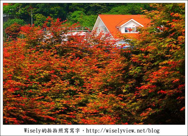 【景點】陽明山台北奧萬大2011-遲訪的楓紅 (Panasonic GF1)