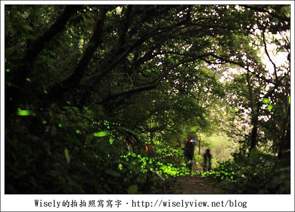 【隨拍】台北.土城青雲路螢火蟲 & 拍攝技巧心得分享 (Canon 5D2)/雅聖鹹蛋糕食記