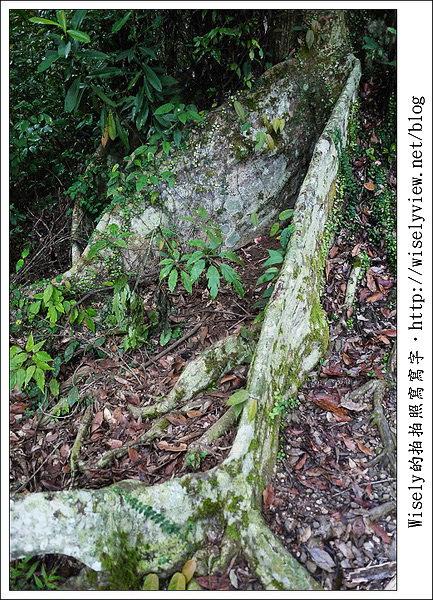 【攝影】宜蘭縣.大同鄉:棲蘭國家森林遊樂區~Lumix GF3隨手拍