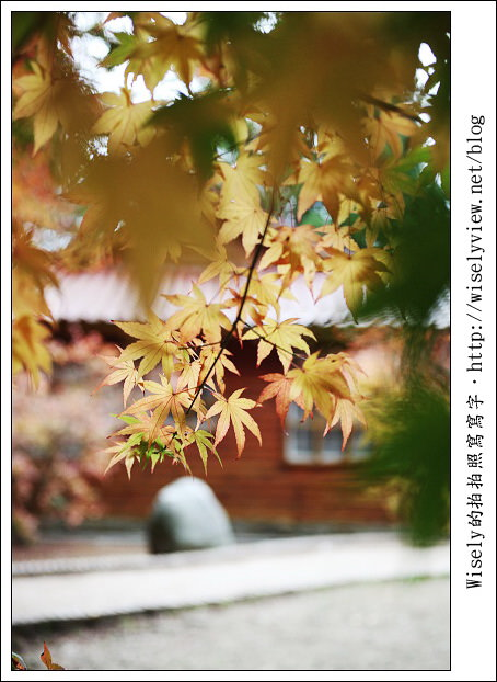 【遊玩】2011台中福壽山農場賞楓隨手拍:Canon 5D2 + 24-105L + Sigma 50/2.8