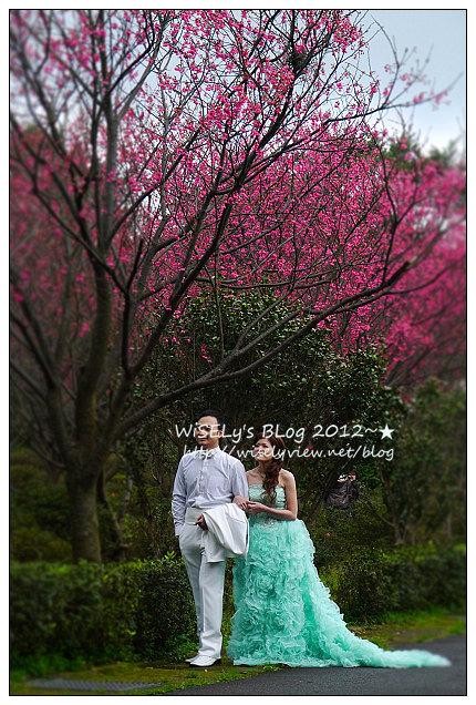 【隨拍】Panasonic Lumix GX1:2012寒櫻隨拍@烏來花園新城、陽明山菁山路一帶、仰德大道花卉試驗中心,再過幾天花會開的更漂亮 (拍攝櫻花小技巧心得分享)
