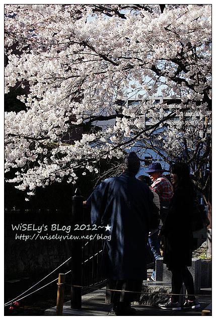 【旅行】2011日本京都:從木屋町通順著「高瀨川一之船入」慢遊,有流水有櫻花有陽光的午后