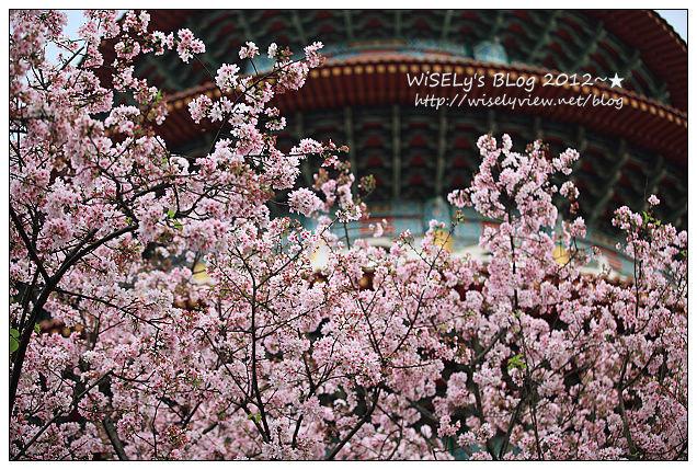 【隨拍】新北市.淡水區:無極天元宮櫻花行~(2012.03.18含交通資訊分享)