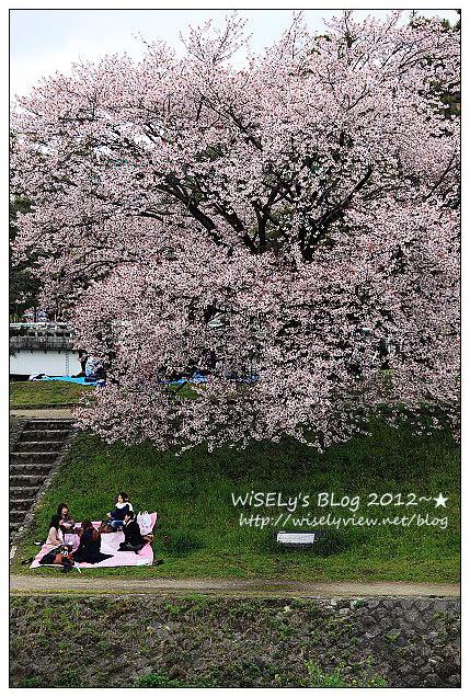 【旅行】2011日本.京都:賀茂川堤防的高野川櫻花~閒遊也有好風景