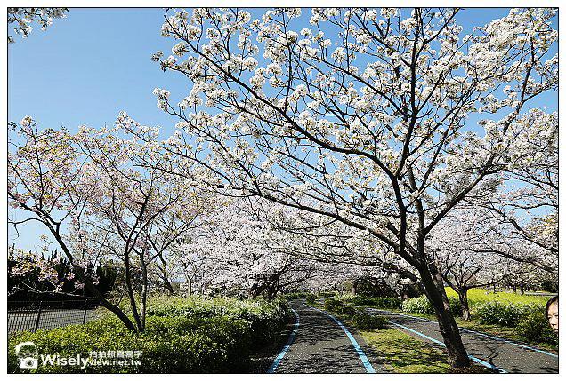 【旅行】2013日本九州。福岡市:海之中道海濱公園@櫻花盛開時騎著單車恣意遊走,多項設施適合親子前往