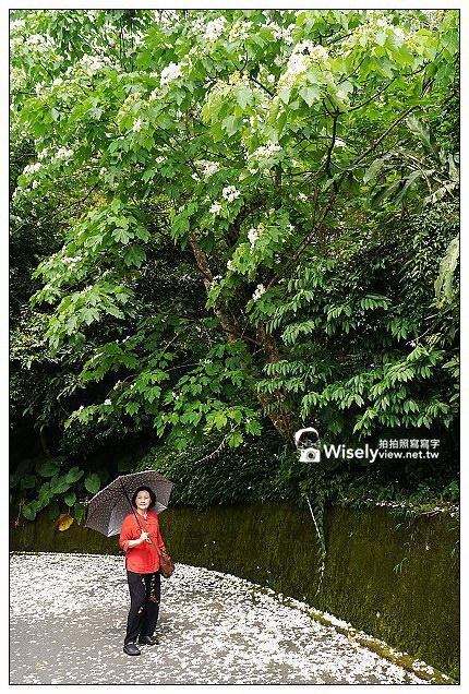 【遊記】宜蘭縣。冬山鄉:仁山植物園@漫步山道賞遊桐,造訪特色異國庭園