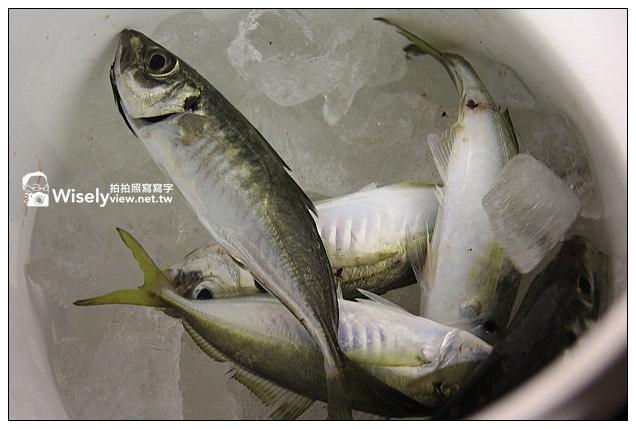 【遊記】2013漁樂台灣,金山蹦火仔-02:磺火誘魚的傳統技法,捕捉青鱗仔魚~(海釣竹筴魚大滿載)