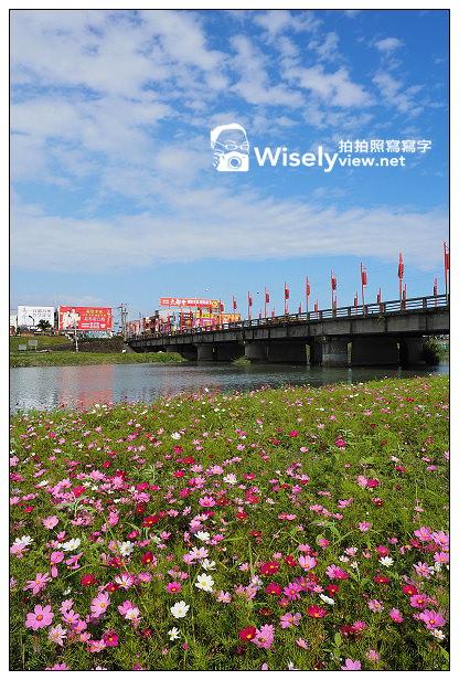 【景點】宜蘭縣。宜蘭市:宜蘭河濱公園@左岸河堤旁的波斯菊花盛開~拍攝要領&交通指南