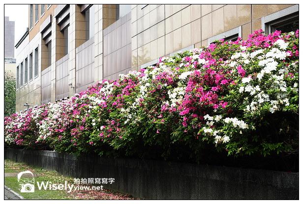 【遊記】台北市。中正區:2014台大杜鵑花節隨拍(3/16花況),韓客御廚食記@公館商圈