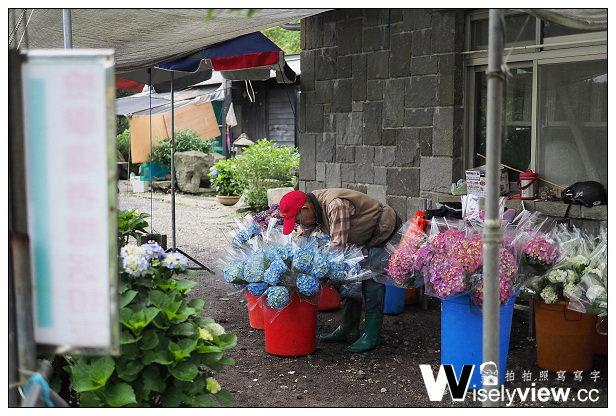 【遊記】台北市。北投區:2014陽明山竹子湖繡球花季@大賞園繡球花~含交通資訊