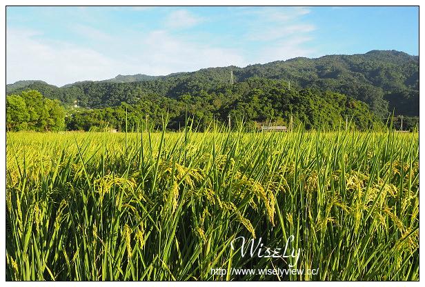 【遊記】宜蘭縣。三星鄉:有機米香節@黃金大道、巨型稻草農夫、橘黃波斯菊田