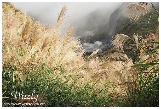 【遊記】台北市。北投區:陽明山芒草景點@小油坑橋~仰望火山噴氣孔與歐風秋芒景色