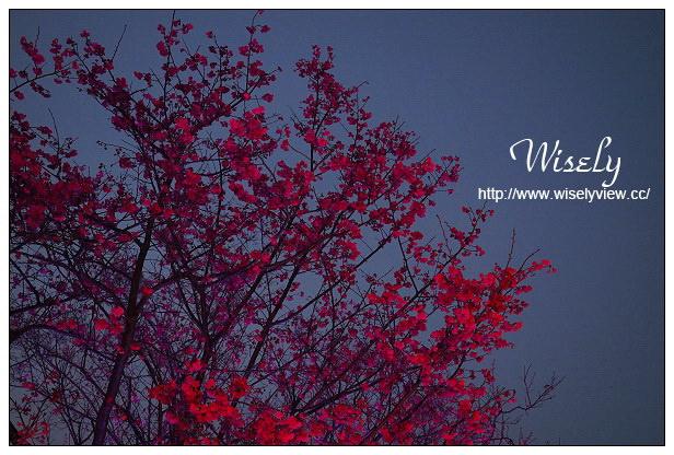 【遊記】台北市。北投區:台北櫻花名所@復興三路櫻花隧道(白宮山莊)~夜櫻計畫之台北驚夜