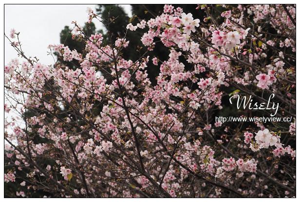 【遊記】台北市。中正區:2015中正紀念堂櫻花@杭州南路段(山櫻花)、愛國東路段(大漁櫻)~賞櫻路線分享