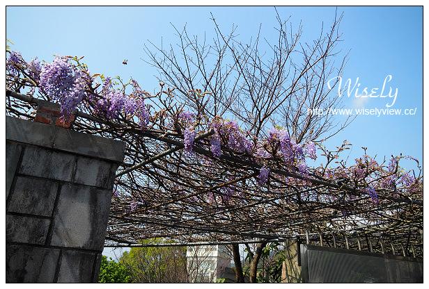 【遊記】台北市。陽明山花季:2015竹子湖海芋季@苗榜花園餐廳~賞花餐點交通分享