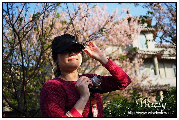 【遊記】台北市。士林區:陽明山花季@2015東方寺吉野櫻滿開&鄰近紫藤花順訪