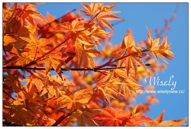 【遊記】台北市。士林區:陽明山花季:2015陽明山台北奧萬大,賞楓季3/25~5/10