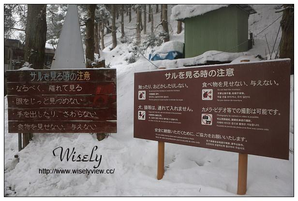 【旅行】日本。長野縣:地獄谷野猿公苑@著名猴子泡溫泉,可愛雪猴隨你拍