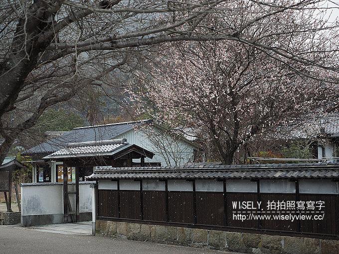 【旅行】日本中國。山口岩國:岩國錦帶橋@擁有「三大名橋」與「三大奇橋」美名的木造橋樑
