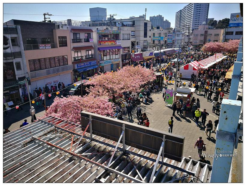 日本。神奈川︱三浦海岸:河津櫻與油菜花相伴,京急線品川出發1小時多即達
