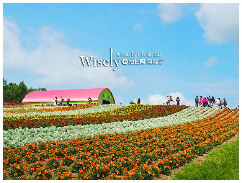 北海道美瑛。展望花畑 四季彩の丘︱視野遼闊的彩虹花田,美麗夢幻花海景色