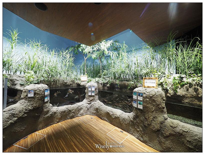 山形庄內。鶴岡加茂水族館︱超療癒夢幻水母晶球缸,水母種類展示全球No.1