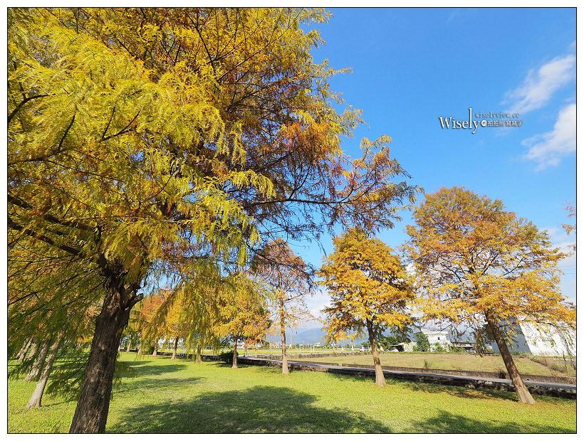 宜蘭落羽松秘境。三星安農溪落羽松︱交通路線、拍攝分享~宜蘭秋冬景點