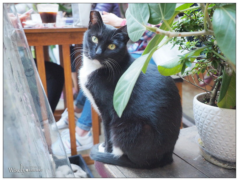 台北松山。Remember Me_記得我.Café︱小巨蛋旁有店貓的文青工業風深夜咖啡店