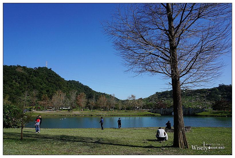 宜蘭落羽松景點。員山蜊埤湖福園︱每年12月至隔年1月限定美景,拍照打卡親子野餐必訪