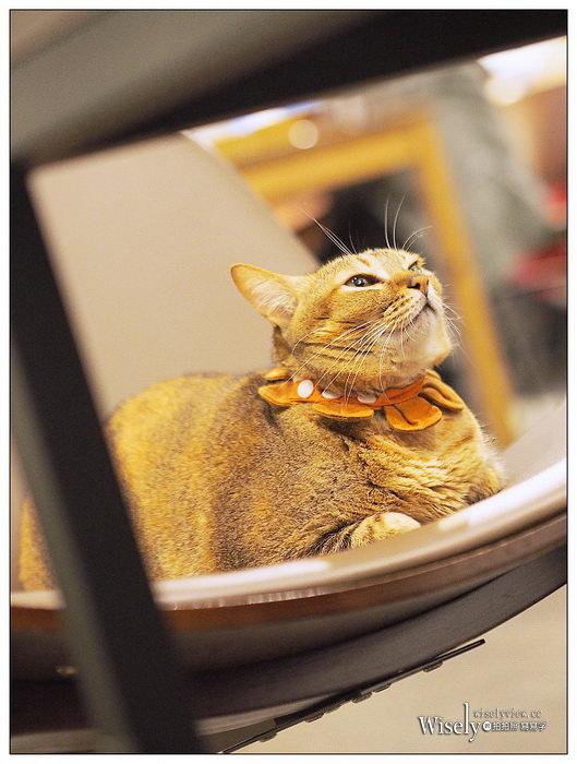 台北貓咖啡 Toast Chat︱東區國父紀念館不限時貓咪早午餐,提供WiFi插座
