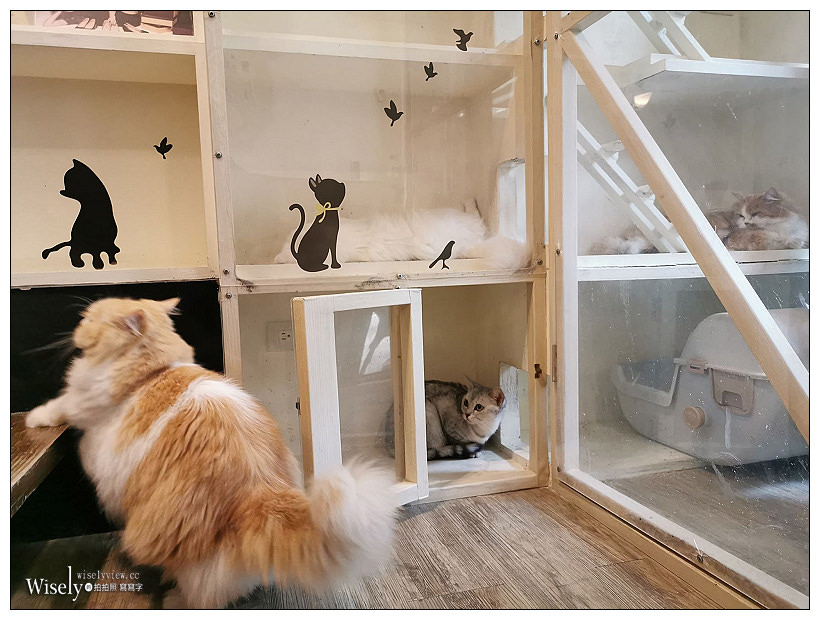 台北。和貓咪有約-貓咪主題咖啡館︱內有20隻可愛貓咪貓,鄰近捷運南京三民站與台北小巨蛋,提供插座WIFI不限時,空間略小但乾淨,平均消費NT150