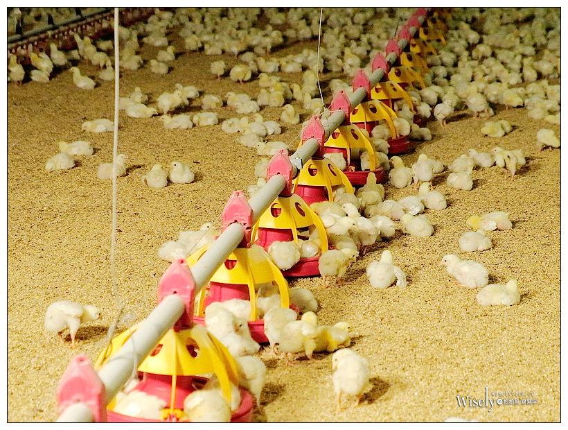 國產白肉雞推廣。把關好食雞 美味更安心︱拍照上傳抽 iPhone11 & 全台 2500 份雞排 雞翅免費吃