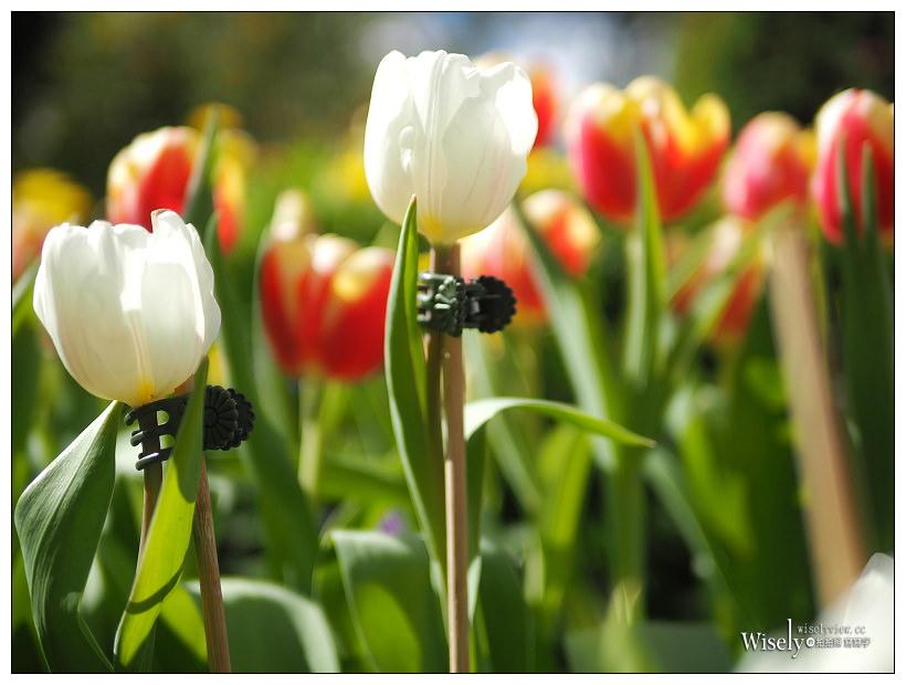 2021 士林官邸鬱金香展:2/25-03/07︱活動時間、展區介紹、交通接駁、拍攝分享~花 in 台北 x 士林景點