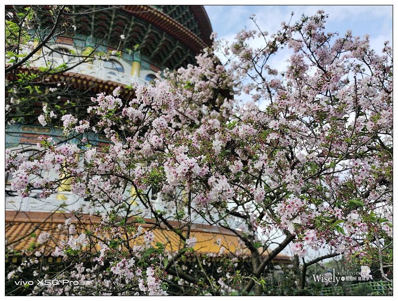新北賞櫻景點。淡水無極天元宮 2021-03-10︱櫻花花期與交通資訊,親子出遊一日遊~淡水景點