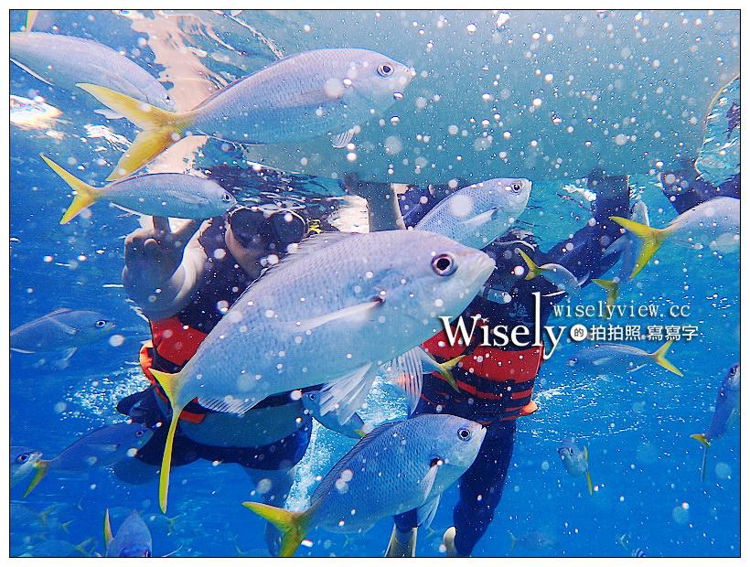 最新推播訊息:帛琉潛水行程︱大斷層、牛奶湖、水母湖、日軍沉船海域、黃金玫瑰珊瑚礁花園、長沙灘島午餐、七彩軟珊瑚、藍色珊瑚礁、曼妙島、鯊魚城&干貝城