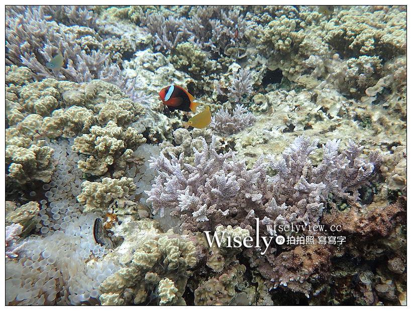 最新推播訊息:帛琉景點潛水。Olympus Tough TG-3︱出海浮潛實拍與飯店隨拍記錄