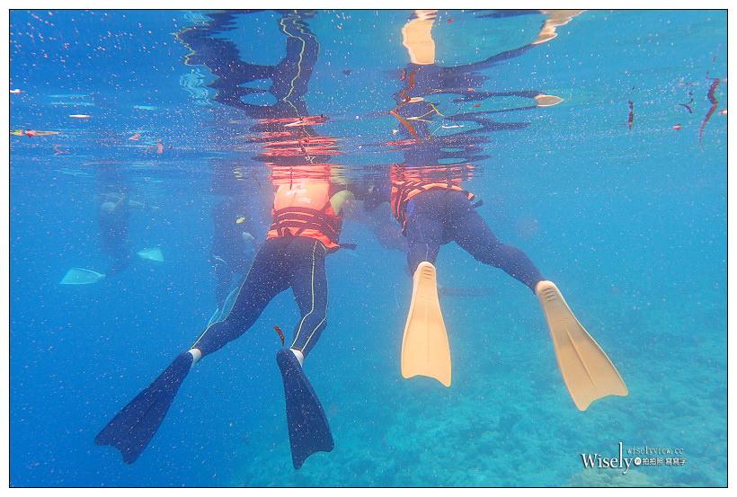 帛琉景點潛水。Olympus Tough TG-3︱出海浮潛實拍與飯店隨拍記錄~珊瑚礁、小丑魚和黃金水母